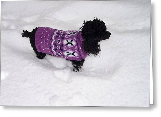 Dog In The Snow Greeting Cards - Cant Move Greeting Card by Regina McLeroy