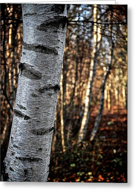 Birch Tree Greeting Cards - Cant See The Forest For The Tree Greeting Card by Odd Jeppesen