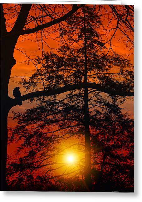 Giclée Fine Art Greeting Cards - Cant Wait Until Tommorrow Greeting Card by Tom York Images