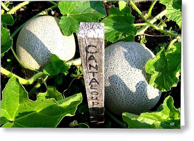 Melon Greeting Cards - Cantaloupe Greeting Card by Will Borden