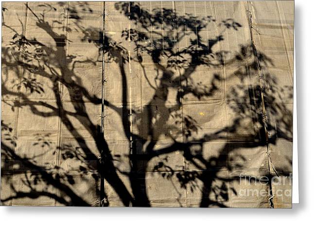 Shadowplay Greeting Cards - Canvas Print Greeting Card by Dean Harte