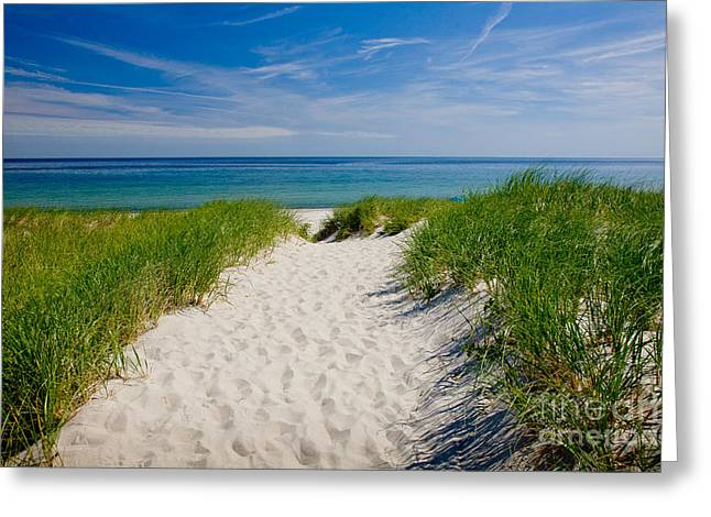 Eastern American Beach Grass Greeting Cards - Cape Cod Bay Greeting Card by Susan Cole Kelly