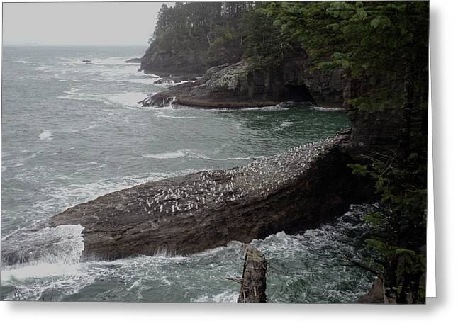 Cape Flattery Greeting Cards - Cape Flattery Shoreline Greeting Card by Fred Russell