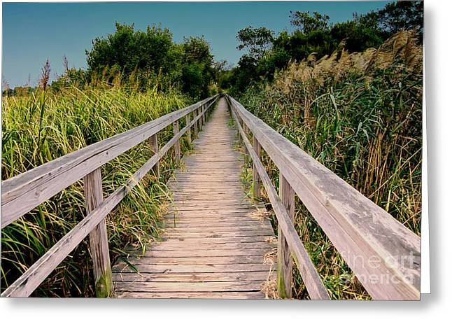 Plant Stretched Canvas Greeting Cards - Cape Hatteras Greeting Card by Gerlinde Keating - Keating Associates Inc