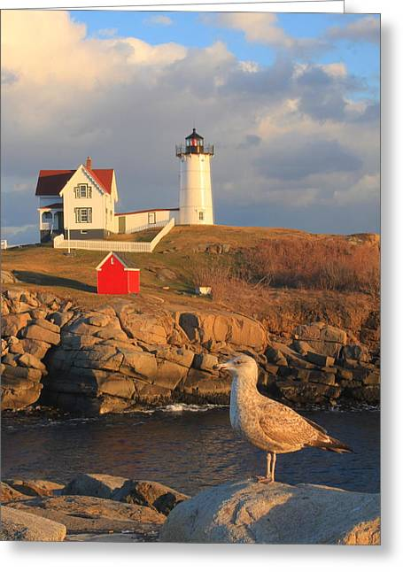 Cape Neddick Nubble Lighthouse And Seagull Greeting Card by John Burk
