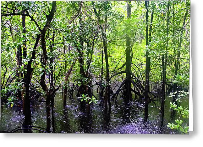 Best Sellers -  - Mangrove Forest Greeting Cards - Cape Tribulation Rain Forest Mangroves Greeting Card by Harry Strharsky