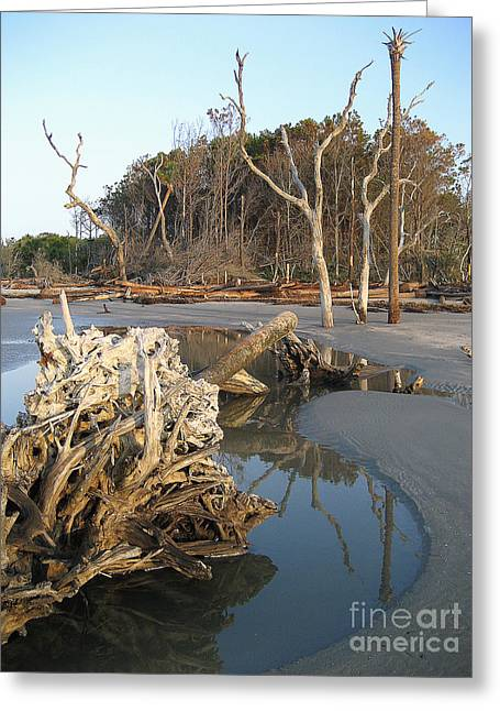 Driftwood Greeting Cards - Capers Island 2007 Greeting Card by Judee Stalmack
