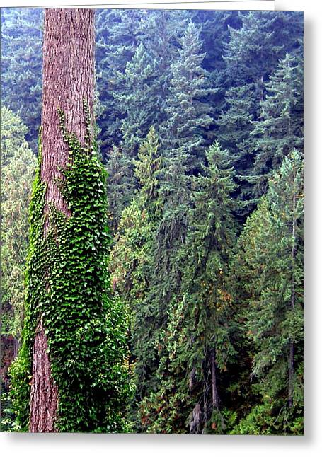 North Vancouver Greeting Cards - Capilano Canyon Ivy Greeting Card by Will Borden