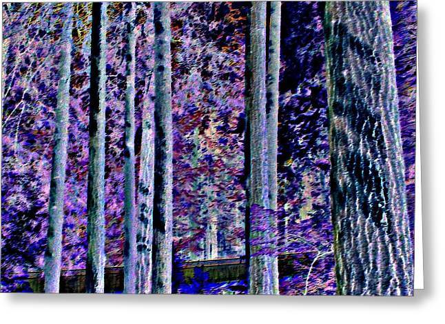 Forest At Night Greeting Cards - Capilano Dark Greeting Card by Randall Weidner