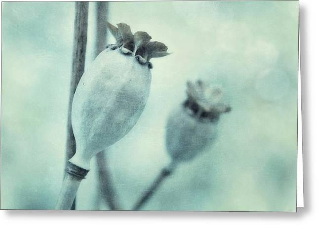 Capsule Series Greeting Card by Priska Wettstein