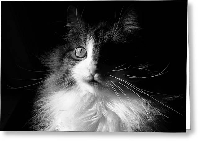 Kitteh Greeting Cards - Captivated Cat - A Tribute Greeting Card by Chantal PhotoPix