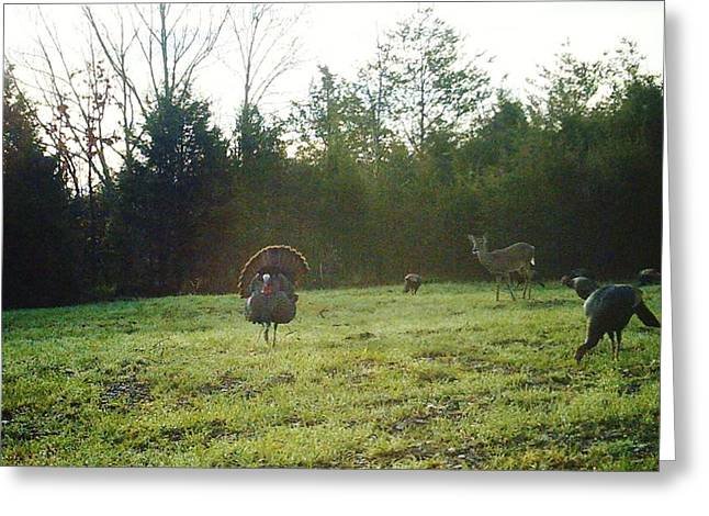 Spring Gobbler. Greeting Cards - Captive audiance Greeting Card by Raymond Robinson