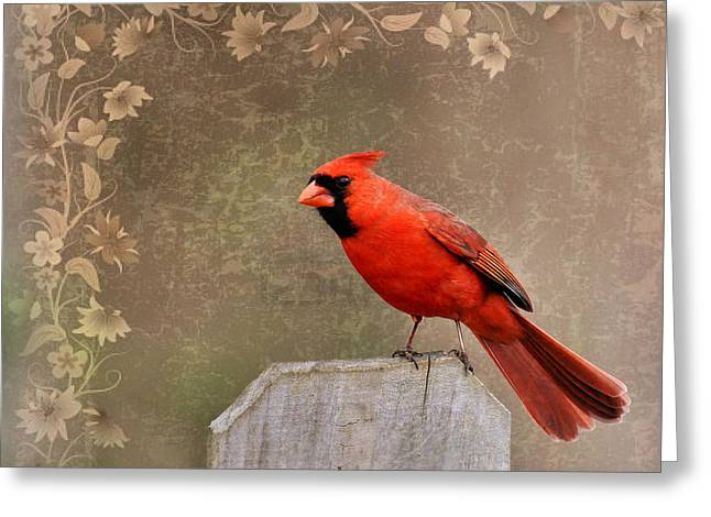 Cardinals. Wildlife. Nature. Photography Greeting Cards - Cardinal 3 Greeting Card by Todd Hostetter