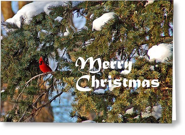 Cardinal Christmas Card Greeting Card by Aimee L Maher Photography and Art Visit ALMGallerydotcom