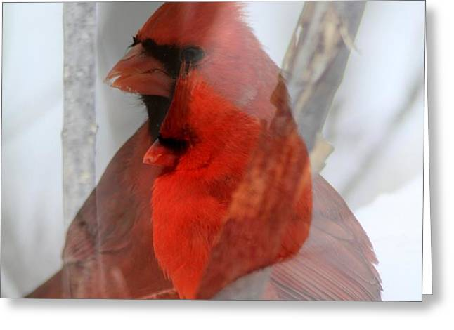 Cardinal Collage Greeting Card by RICK RAUZI