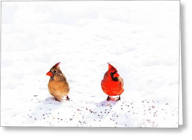 Tamyra Ayles Greeting Cards - Cardinal Couple II Greeting Card by Tamyra Ayles
