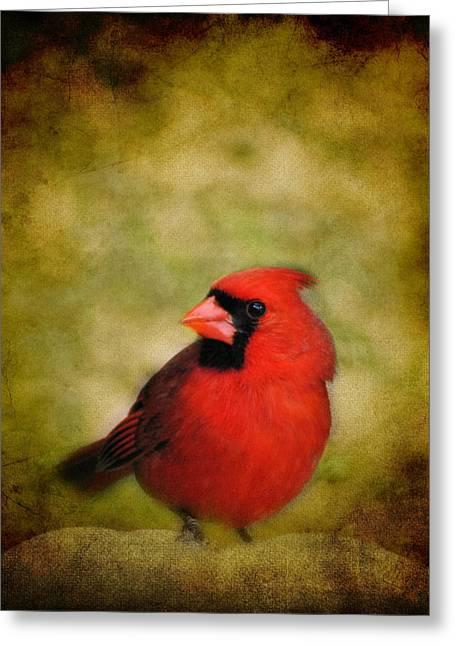Cardinal Photo Greeting Cards - Cardinal I Greeting Card by Jai Johnson
