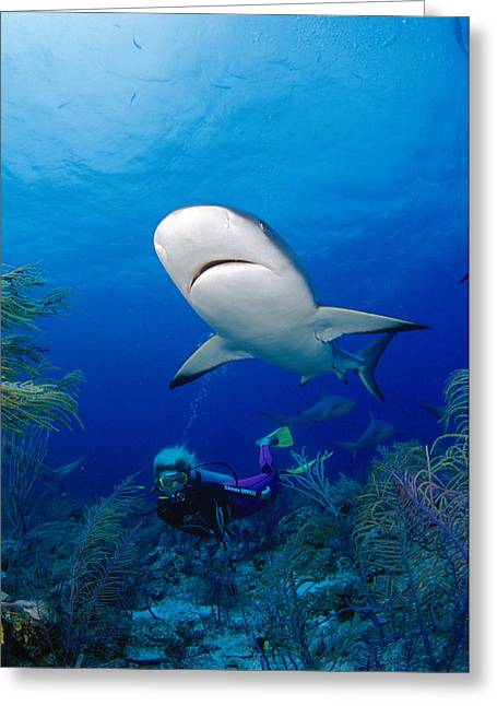 Dave Fleetham Greeting Cards - Caribbean Reef Shark Greeting Card by Dave Fleetham - Printscapes