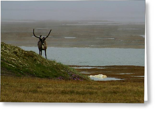 Caribou Greeting Cards - Caribou Fog Greeting Card by Anthony Jones