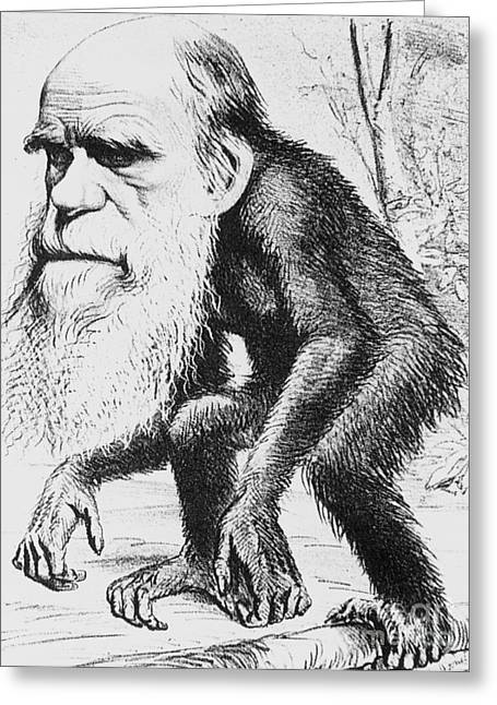 Unnatural Greeting Cards - Caricature Of Charles Darwin, 1871 Greeting Card by Science Source