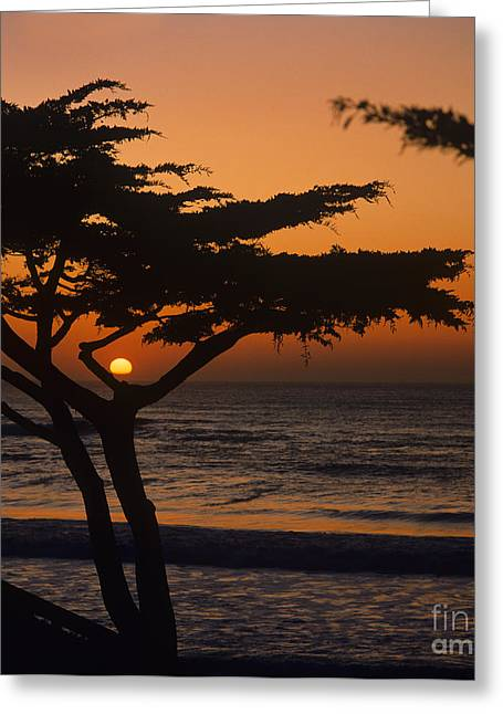 Ocean Vista Greeting Cards - Carmel-t3-2 Greeting Card by Craig Lovell