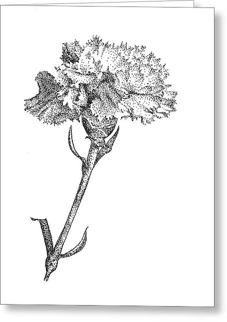 Flora Drawings Greeting Cards - Carnation Greeting Card by Christy Beckwith