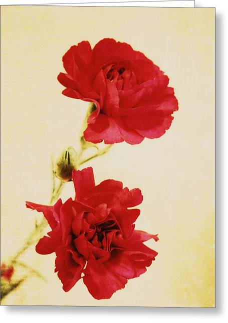 Pink Carnations Greeting Cards - Carnations Greeting Card by Cathie Tyler