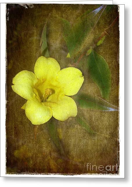 Jessamine Greeting Cards - Carolina Jessamine Greeting Card by Judi Bagwell