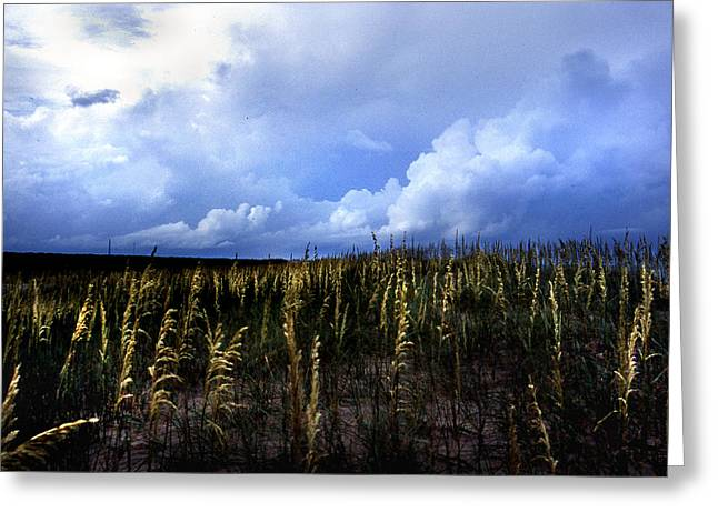 Pictures Of Sea Life Greeting Cards - Carolina Sea Oats Greeting Card by Skip Willits