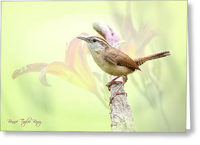 Wren Greeting Cards - Carolina Wren in Early Spring Greeting Card by Bonnie Barry