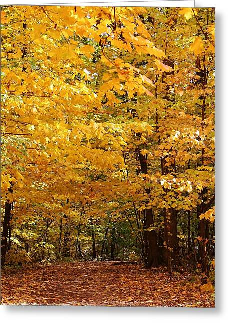 Carpet Of Leaves Marks The Path Greeting Card by Bruce Bley