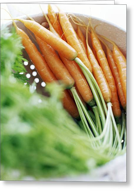 Daucus Greeting Cards - Carrots Greeting Card by David Munns