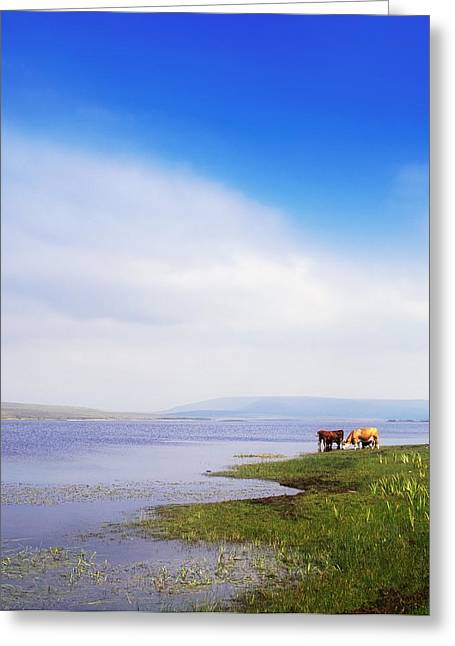 Flooding Greeting Cards - Carrowmore Lake, Co Mayo, Ireland Greeting Card by The Irish Image Collection