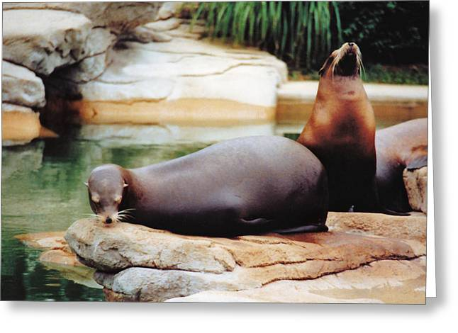 Recently Sold -  - California Sea Lions Greeting Cards - Carry That Weight Greeting Card by Jan Amiss Photography