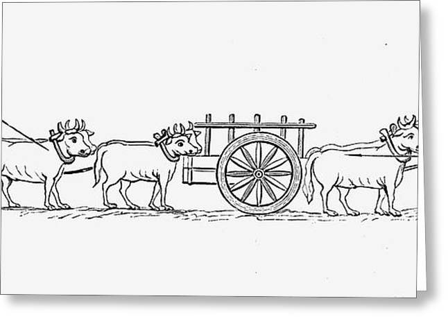 Farmers Field Greeting Cards - CARTS, 11th CENTURY Greeting Card by Granger