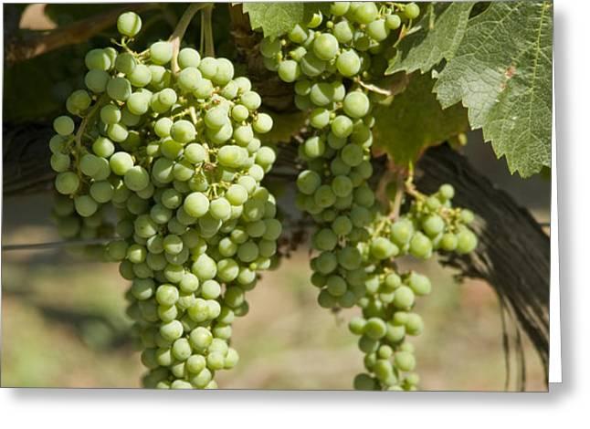 Casa Blanca Valley, Wine Growing Region Greeting Card by Richard Nowitz