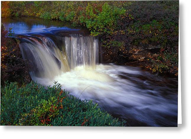 Zen-like Greeting Cards - Cascade On A Small Stream Greeting Card by Nick Norman