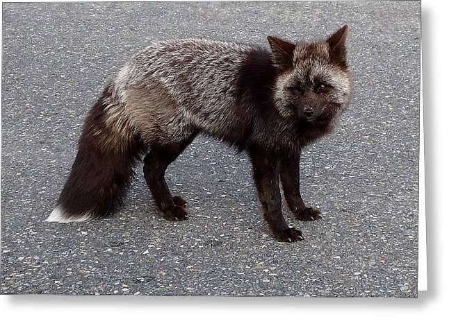 Paradise Road Greeting Cards - Cascade Red Fox -Silver Greeting Card by Peter Mooyman