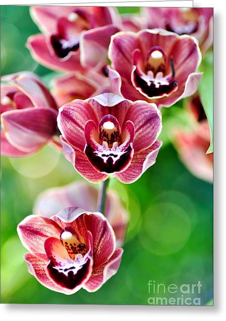 Colorful Orchid Greeting Cards - Cascading Miniature Orchids Greeting Card by Kaye Menner