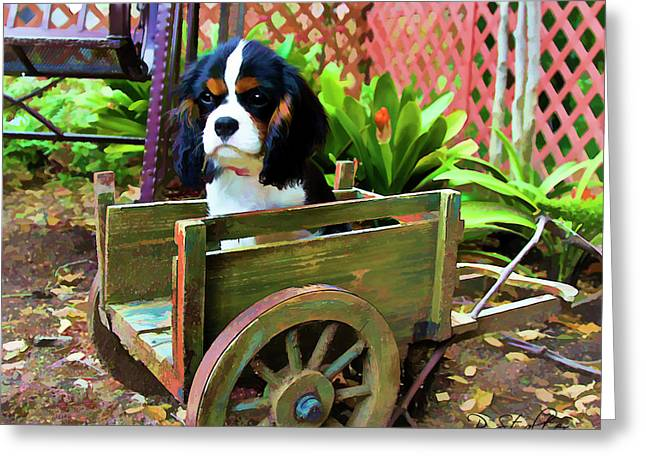 Spaniel Digital Art Greeting Cards - Casey In The Cart Greeting Card by Patricia Stalter