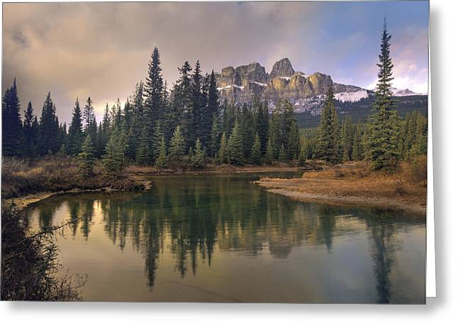 Pinaceae Greeting Cards - Castle Mountain And Boreal Forest Greeting Card by Tim Fitzharris