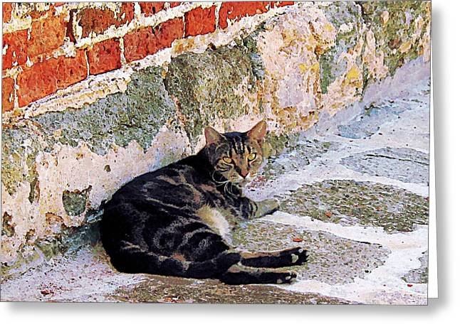 Brick Greeting Cards - Cat Against Stone Greeting Card by Susan Savad