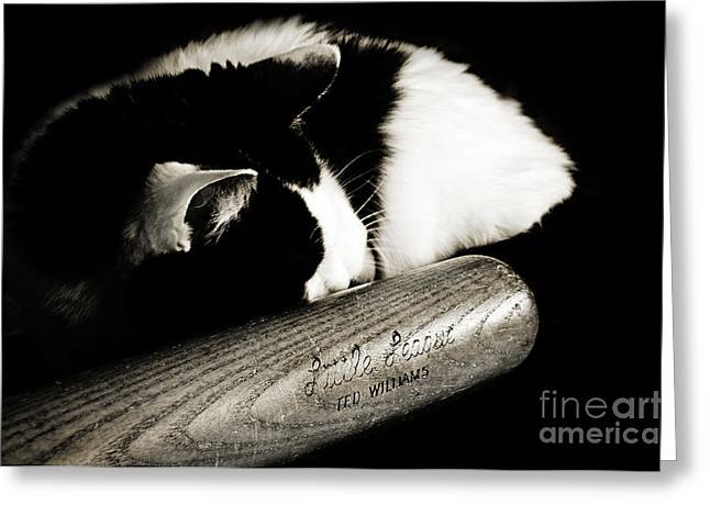 Baseball Fine Art Greeting Cards - Cat and Bat Greeting Card by Andee Design