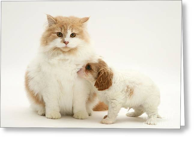 Blank And White Greeting Cards - Cat And Dog Pup Greeting Card by Jane Burton