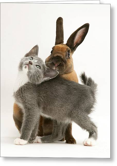 Cute Kitten Greeting Cards - Cat And Rabbit Greeting Card by Jane Burton