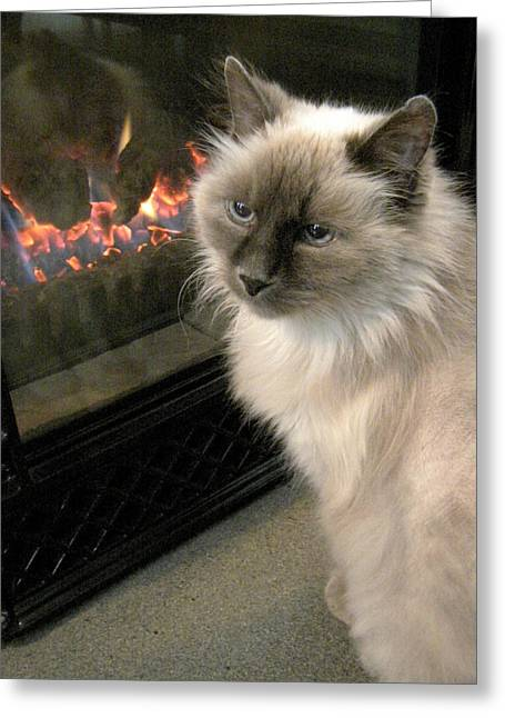 Cat And The Fireplace Greeting Card by Patricia Drohan