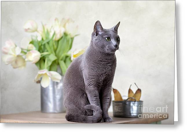 Cat And Tulips Greeting Card by Nailia Schwarz