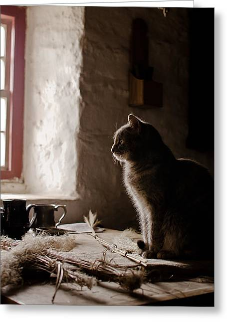 Swift Family Greeting Cards - Cat at the Window Greeting Card by Swift Family