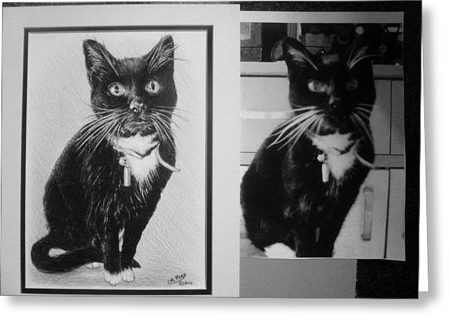 Cat Drawings Greeting Cards - Cat commission sample Greeting Card by Andrew Read
