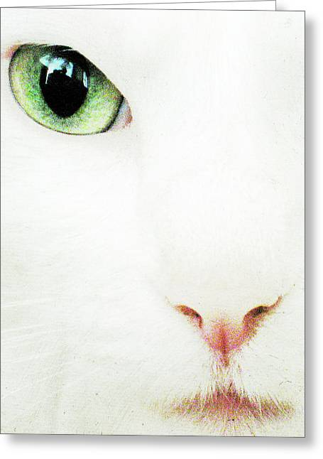 Cat Eye Greeting Card by Julie Niemela